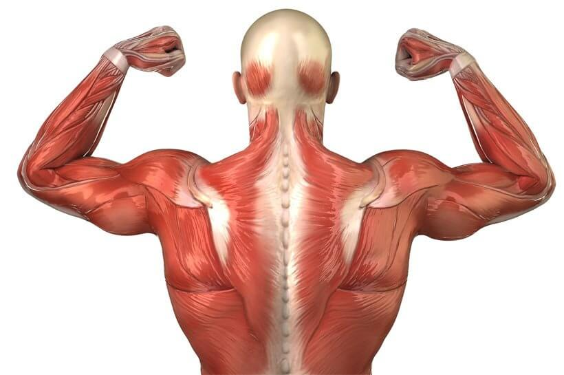 Deep Tissue Massage For Deep Muscle